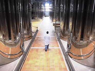 Spot Producción del aceite de oliva
